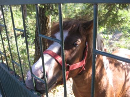 Un cal foarte bland si foarte frumos din Voinesti Covasna
