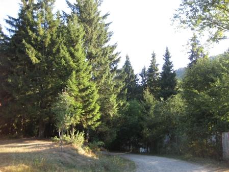 DRUM FORESTIER DIN PADUREA VOINESTI COVASNA